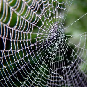 cobweb-josef-stuefer